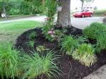 oak tree flower bed