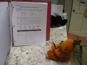 Pumpkin Bear learning Latin