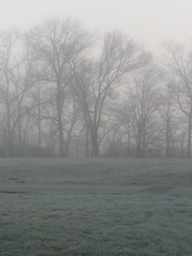frosty foggy morning