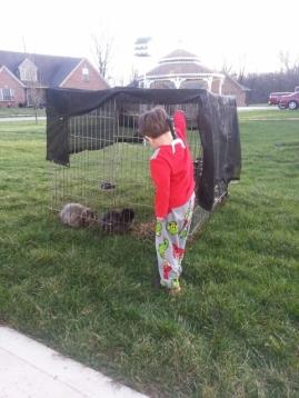 Littlest bringing treats to bunnies