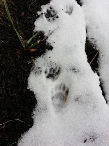 snowy visitors