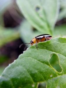 little bug with my macro lens