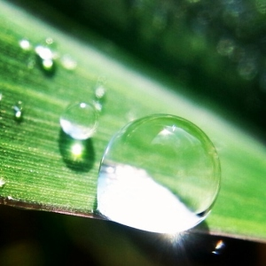 dew drop on Sunday morning